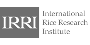 International rice research institute logo